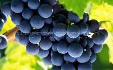 frutta (3).jpg